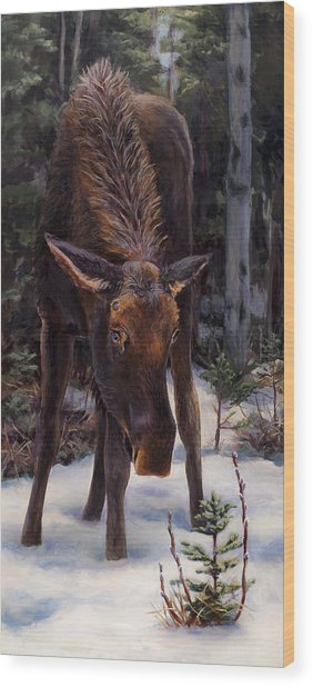 Young Moose And Snowy Forest Springtime In Alaska Wildlife Home Decor Painting Wood Print
