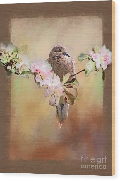 Young Morning Dove Wood Print