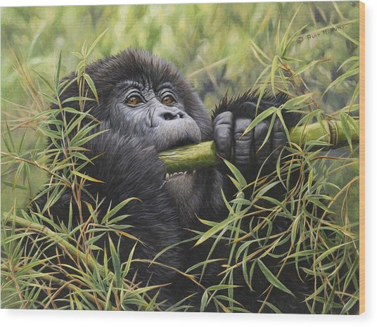 Young Mountain Gorilla Wood Print