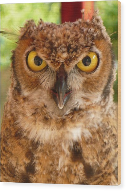 Young Owl Wood Print by Jan Bennicoff