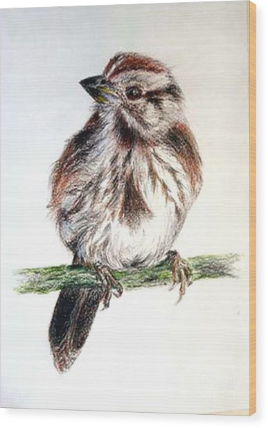 Young Sparrow Wood Print