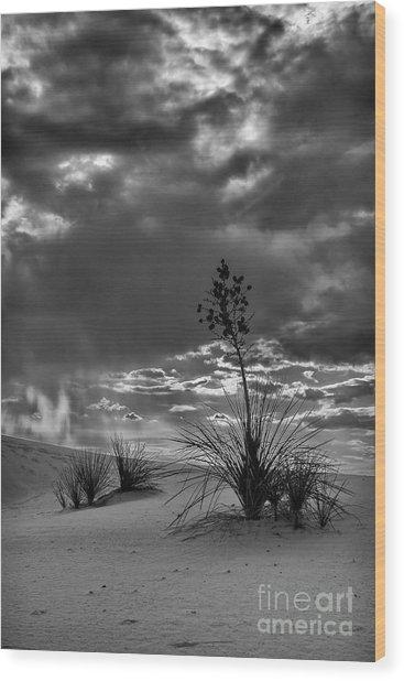 Yucca At Sunset Wood Print