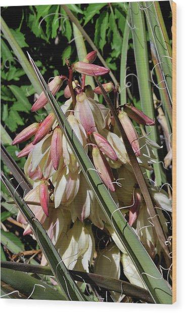 Yucca Bloom I Wood Print