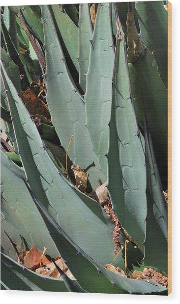 Yucca Leaves Wood Print
