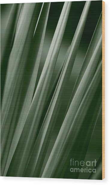 Yucca Spikes Wood Print by Jeannie Burleson
