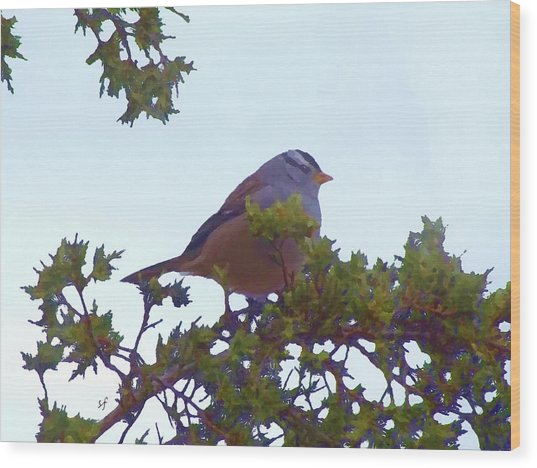 Wood Print featuring the digital art White Crowned Sparrow In Cedar by Shelli Fitzpatrick