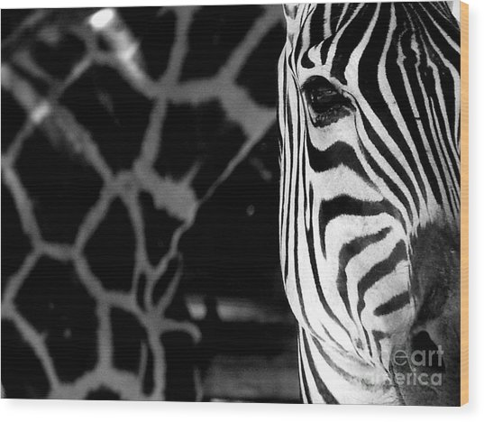 Zebra G Wood Print by Tonya Laker