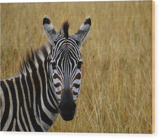 Zebra Half Shot Face On Wood Print