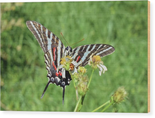 Zebra Swallowtail And Ladybug Wood Print