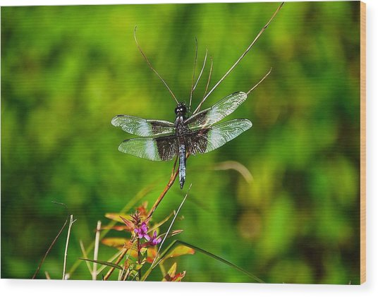 Zen Dragonfly 2 Wood Print