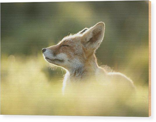 Zen Fox Series - Zen Fox Up Close Wood Print