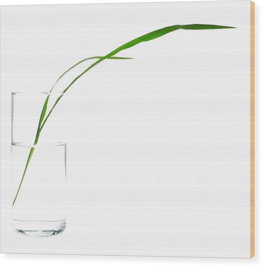 Zen Grass Wood Print