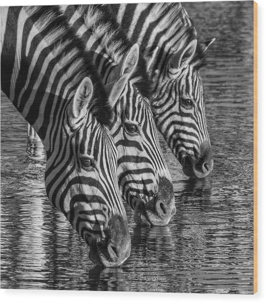 Zerba At The Watering Hole Wood Print