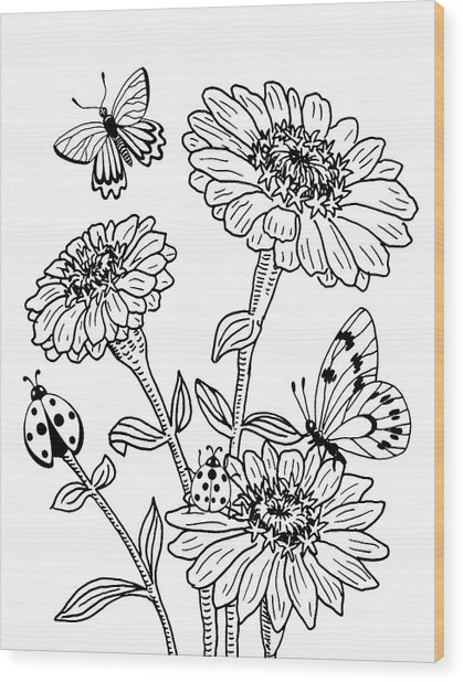 Zinnia And Butterflies Drawing Wood Print