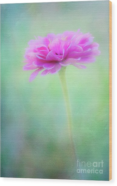 Painted Pink Zinnia Wood Print