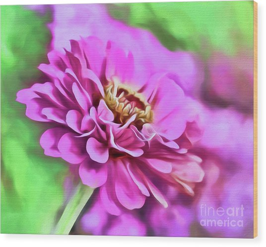 Zinnia Art 2 Wood Print