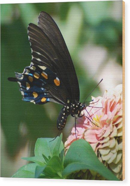 Zinnia Butterfly Wood Print