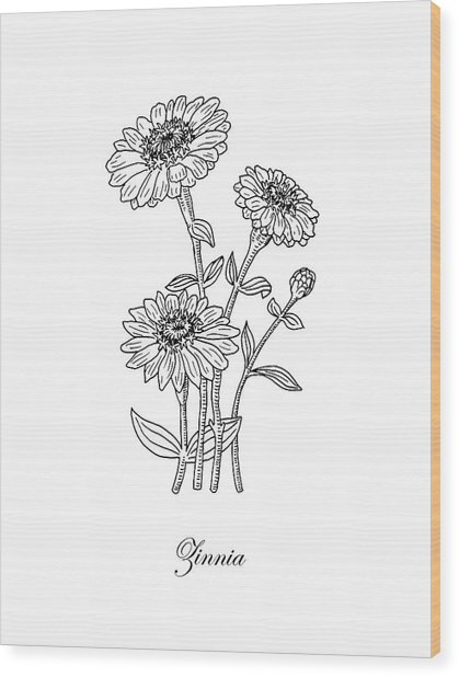 Zinnia Flower Botanical Drawing  Wood Print