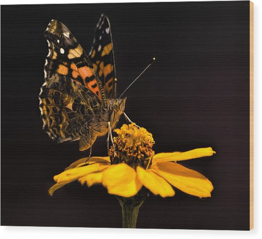 Zinnia Sipping Wood Print