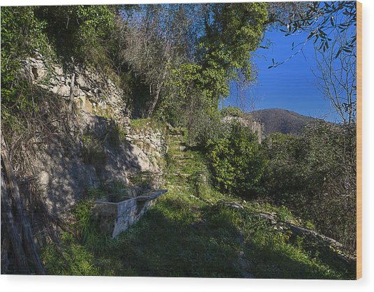 Wood Print featuring the photograph Zoagli Abandoned Ancient Water Basin In The Wood by Enrico Pelos