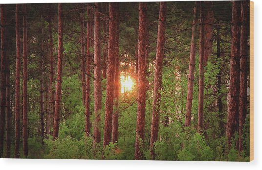 010 - Pine Sunset Wood Print