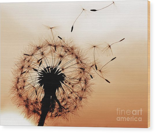 A Dandelion Blowing Seeds In The Wind Wood Print