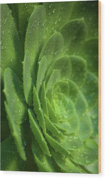 Aenomium_4140 Wood Print