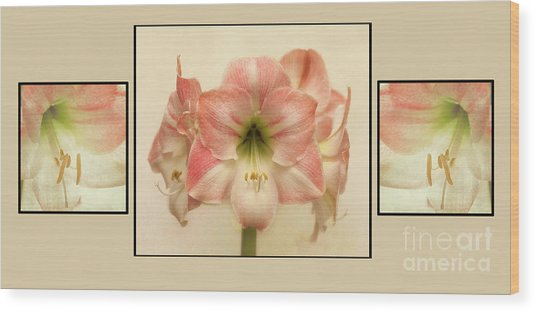 Wood Print featuring the photograph Amaryllis by Ann Jacobson