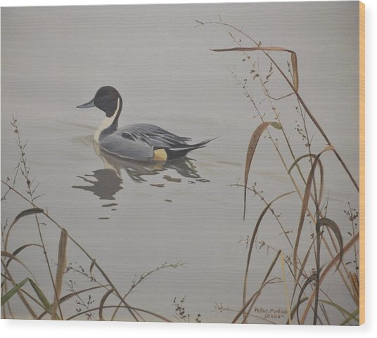 Ankeny Pintail Wood Print
