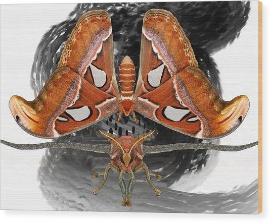 Atlas Moth7 Wood Print