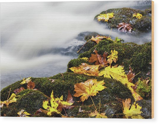 Wood Print featuring the photograph Autumn Creek by Nicole Young