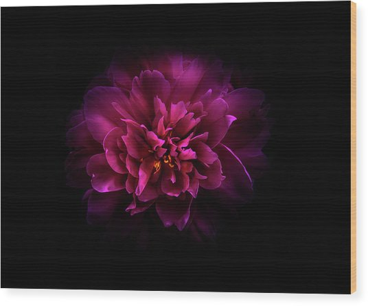 Wood Print featuring the photograph Backyard Flowers 55 Color Version by Brian Carson