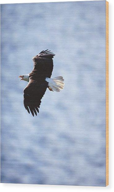 Bald Eagle Haliaeetus Leucocephalus In Wood Print by Art Wolfe