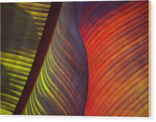 Banana Leaf 8602 Wood Print