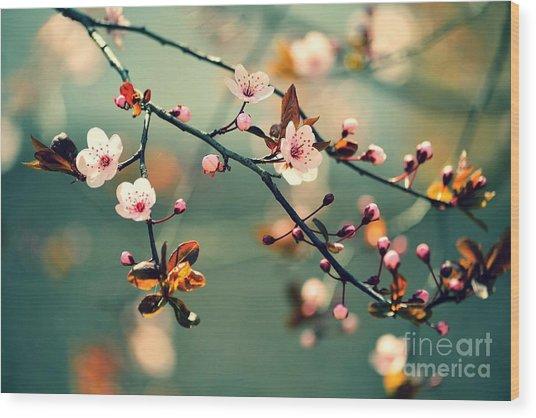 Beautiful Flowering Japanese Cherry - Wood Print