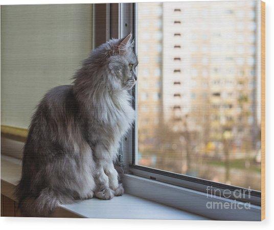 Beautiful Grey Cat Sitting On Wood Print
