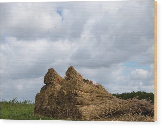 Wood Print featuring the photograph Bound Reeds  by Anjo Ten Kate