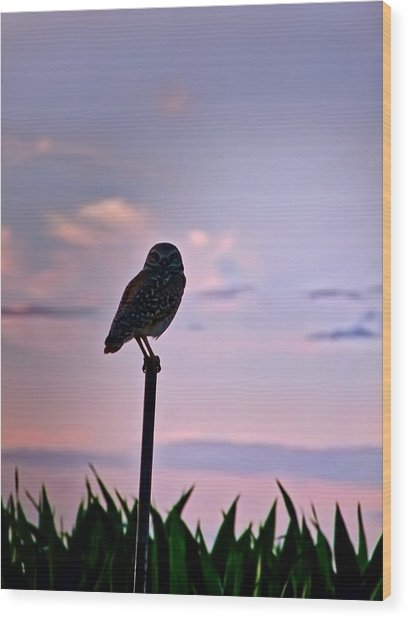 Burrowing Owl On A Stick Wood Print