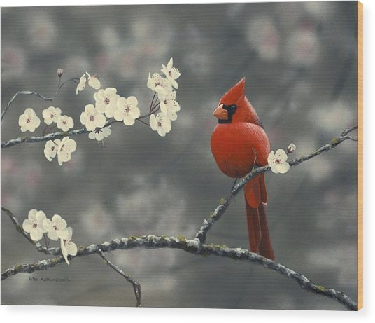 Cardinal And Blossoms Wood Print