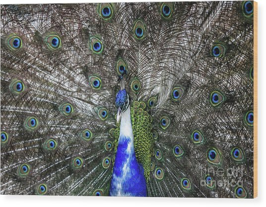 Wood Print featuring the photograph Dancing Peacock by Awais Yaqub