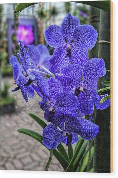 Deep Purple Orchid Wood Print