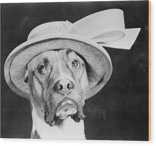 Doggy Hat Wood Print by Keystone Features