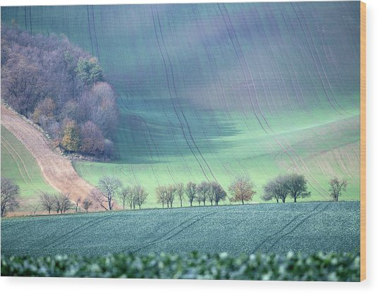 Autumn In South Moravia 1 Wood Print