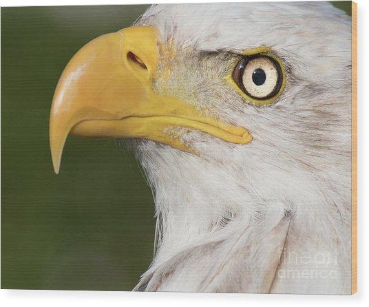 Eagle Portrait Wood Print