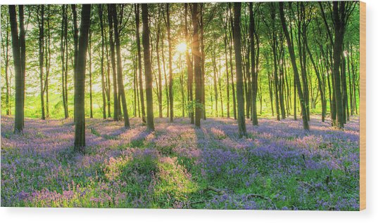 English Bluebells Wood Print