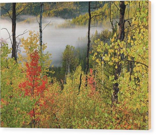 Fall Morning 2 Wood Print by Leland D Howard