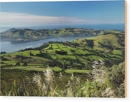 Farmland At Upper Junction, And Otago Wood Print by David Wall