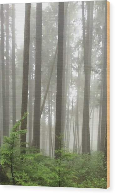Foggy Forest Wood Print
