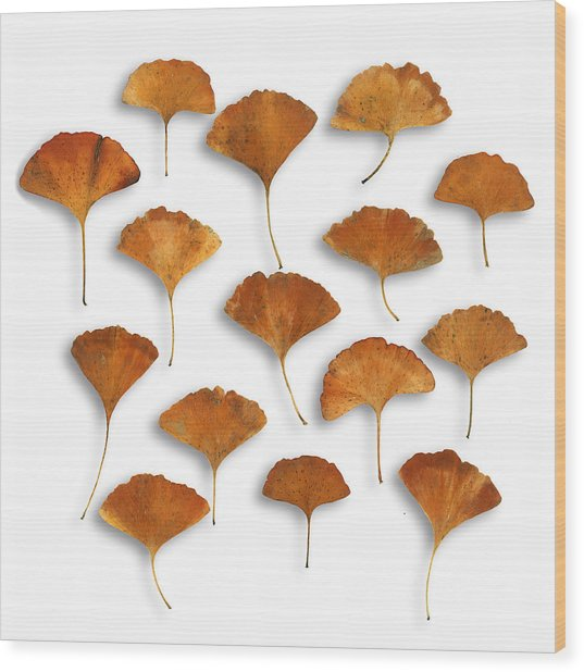 Gingkos Fall Wood Print
