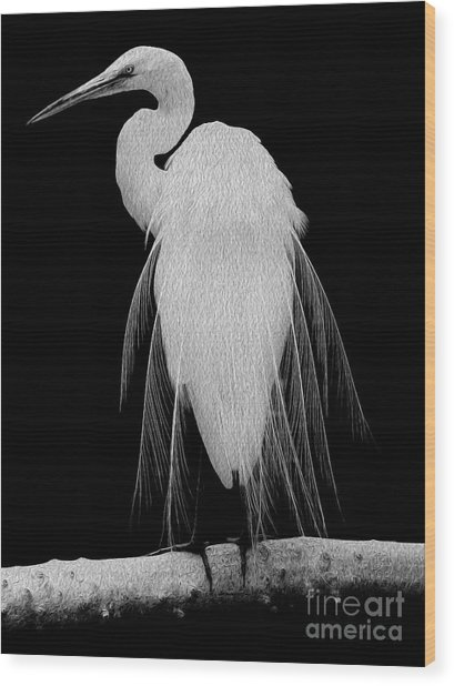 Wood Print featuring the digital art Great Egret In Full Bloom I - R by Kenneth Montgomery